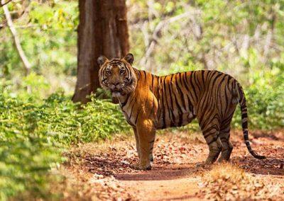 Anashi Tiger Reserve